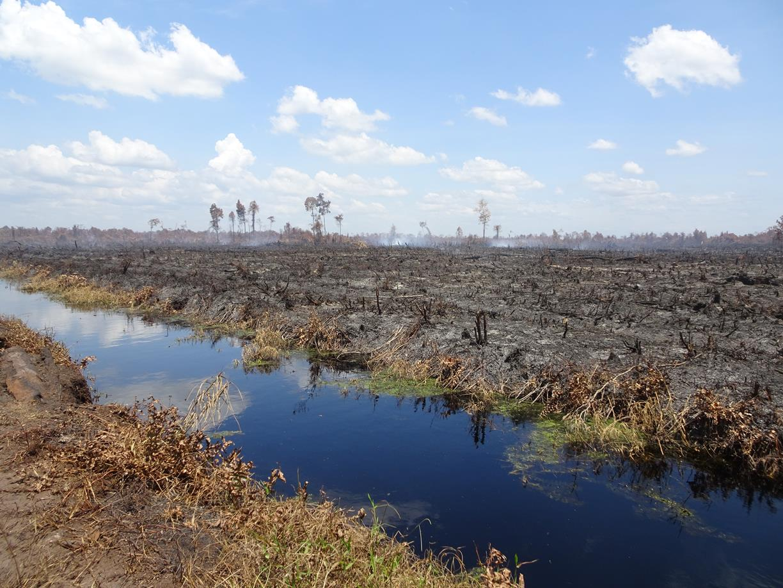 Lokasi Kebakaran lahan gambut di konsesi PT SRL Blok 3 di Desa Teluk Bano 1 pada titik koordinat N1°51'21.09