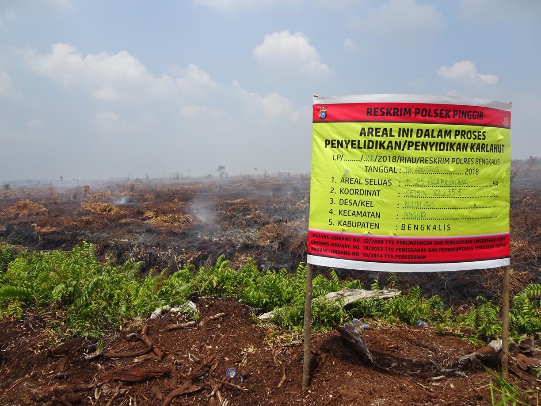 Spanduk dari kepolisian yang menyatakan lokasi kebakaran seluas 25 hektar dalam proses penyidikan Lokasi Kebakaran lahan gambut di konsesi PT RRP di Desa Buluh Apo pada titik koordinat N1°6'19.79