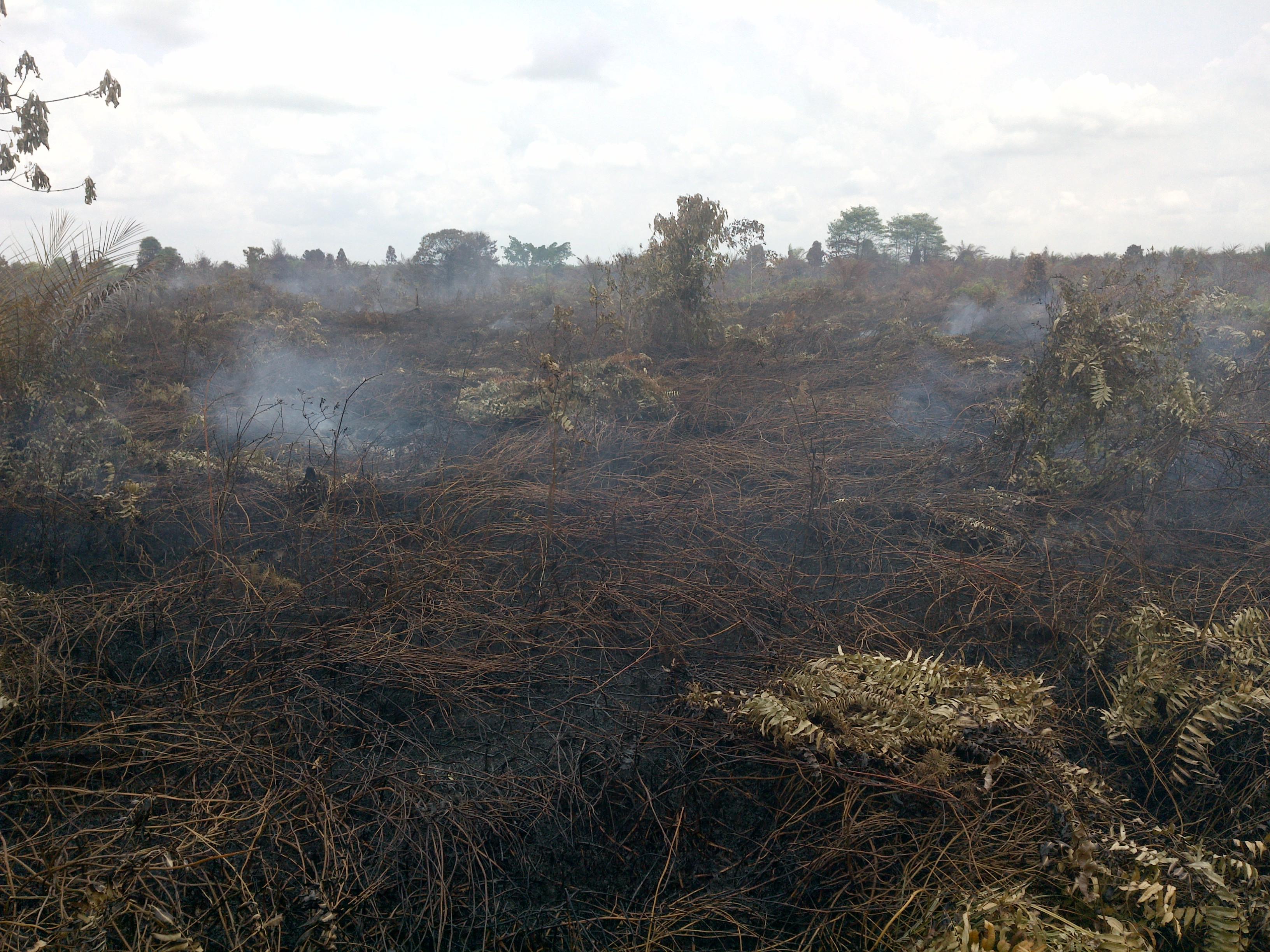 Kebakaran hutan dan lahan di eks konsesi PT Rimba Rokan Perkasa pada tutupan lahan semak  belukar dan tanaman sawit. ©Eyes on the Forest, 2021