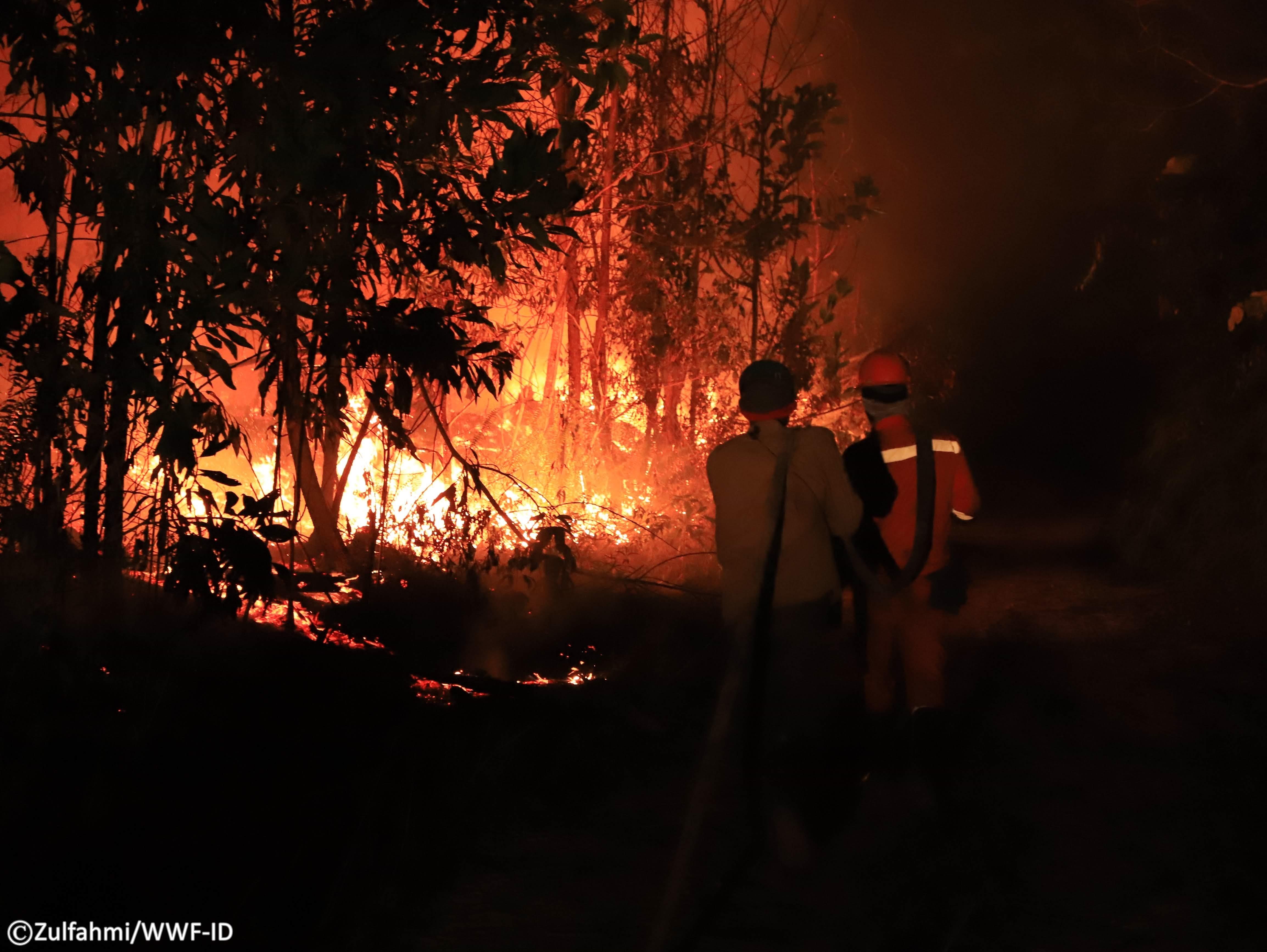 Api terus membara