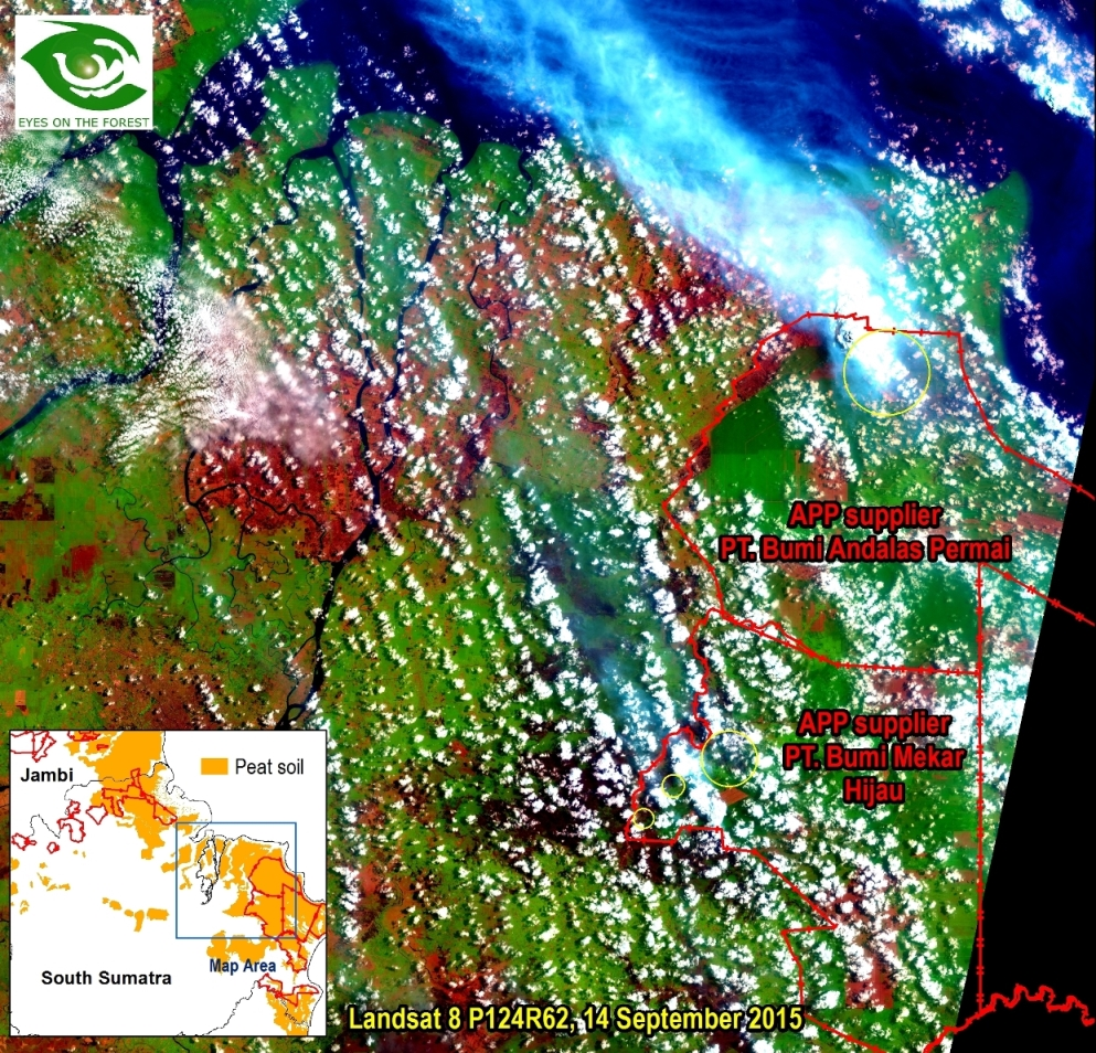 Map 2. Landsat 8 of 14 September 2015 shows some fires (inside yellow circles) and burned areas (dark red-brown) inside and outside APP suppliers PT. Bumi Andalas Permai and PT. Bumi Mekar Hijau and smokes.