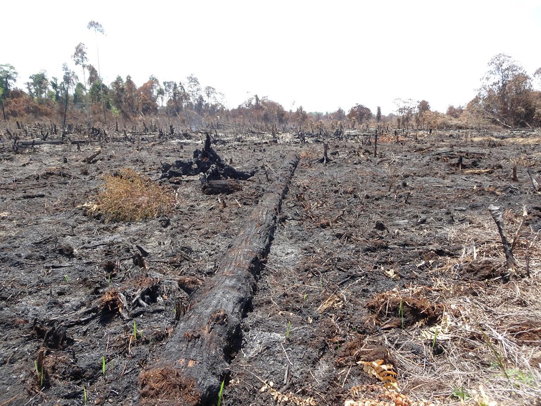 Lokasi Kebakaran lahan gambut di konsesi PT SRL Blok 3 di  Desa Teluk Bano 1 pada titik koordinat N1°51'37.91