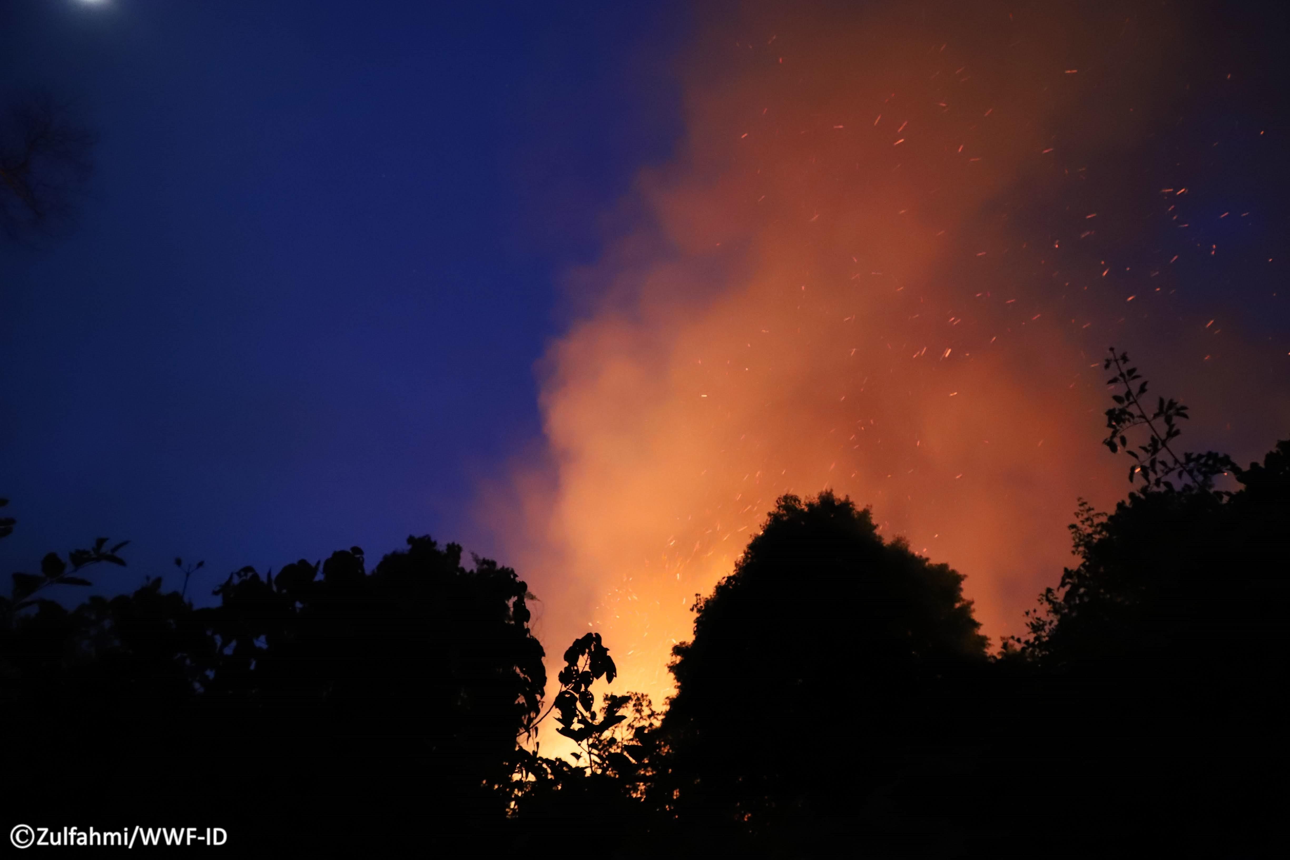 Api mengepung Taman Nasional Tesso Nilo