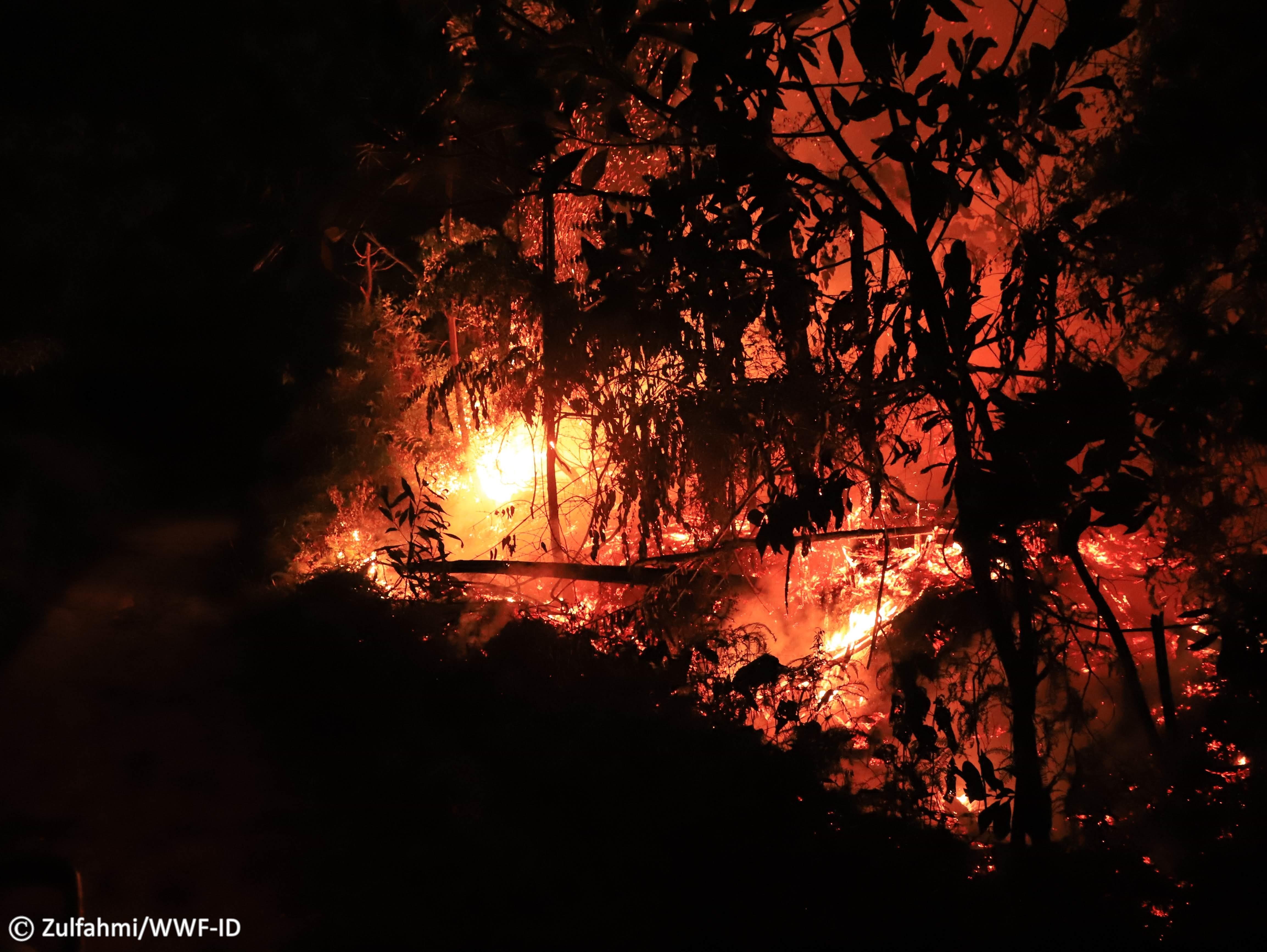 Api membakar lahan Tesso Nilo
