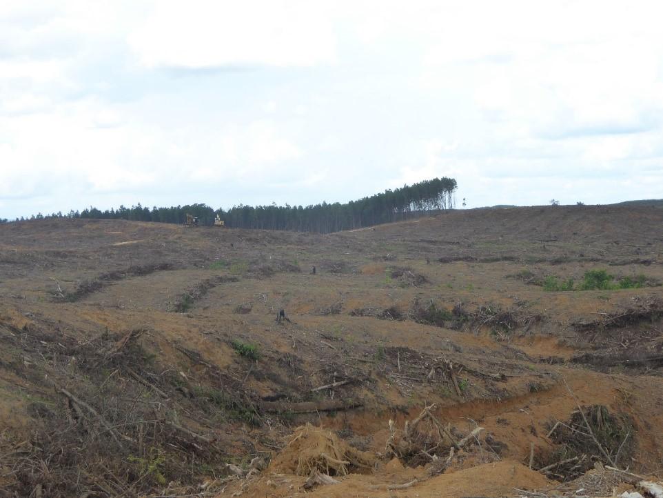 Alat berat sedang bekerja di areal HTI PT. Bukit Batabuh Sei Indah  pada                                 titik koordinat, S0°38'51.78
