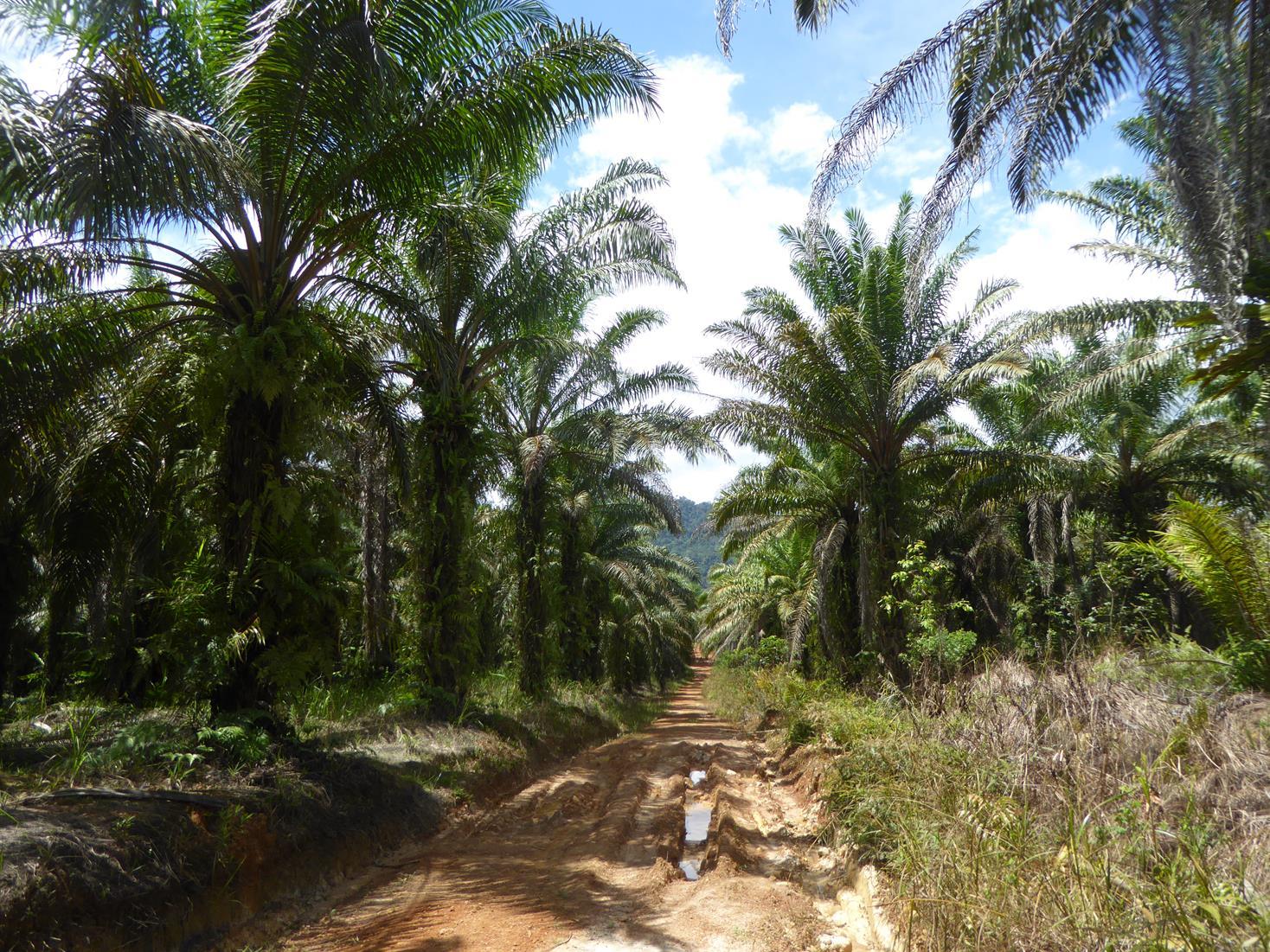 PT Bonti Permai Jaya Raya (Lyman)
